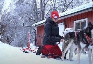Jak na sněhoběžku se psy?