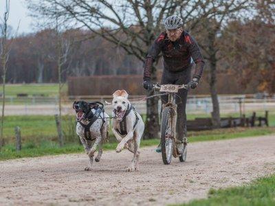 Vezmete-li psa na vycházku, na závod, kamkoliv, je dobré dbát na jeho pitný režim