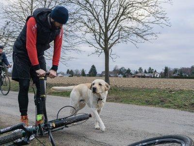 Na startu, správný pes pozná správný mushingový stroj i extrémního jezdce s plnovousem