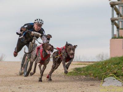 Dogscootering je poutavý a atraktivní sport