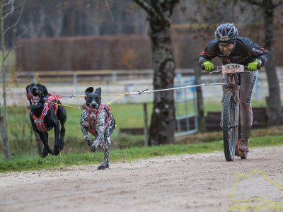 DS2 je závodní kategorie - koloběžka s dvěma psy