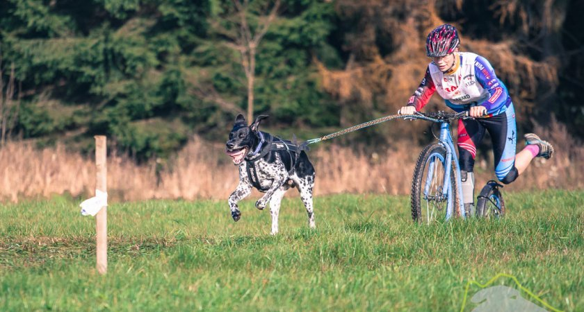 Nemusíte se bát, jakého psa zapřáhnout - jen vědět jak!