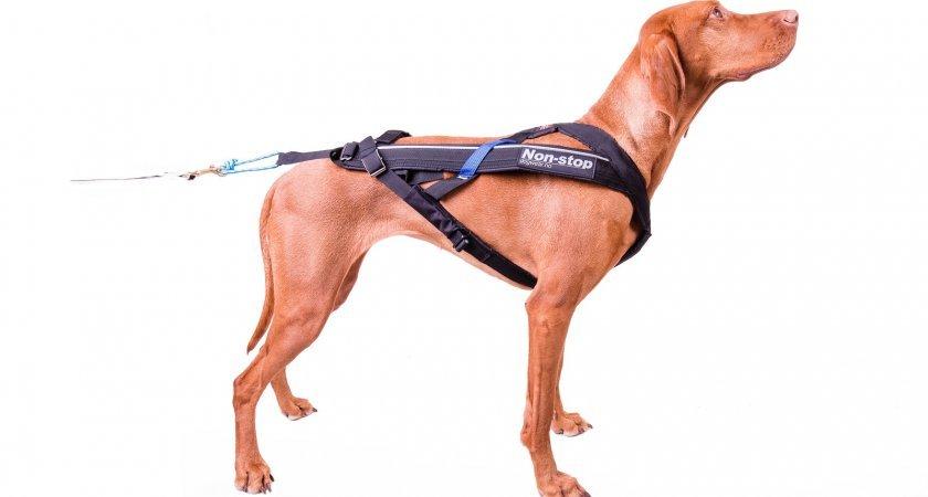Parádní postroj pro psa