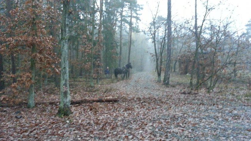 Rozcestí s koněm, který tu ovšem nemusí být vždy